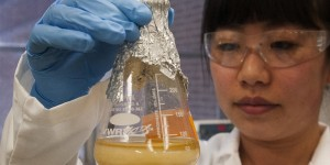 US: STEM post-study work curtailment stayed for 90 days