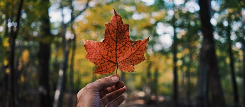 "Canada continues its reign, as decision-making revealed to be a ""family affair"". Photo: Guillaume Jaillet/Unsplash"