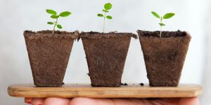 Pearson and BBC sustainability program launched