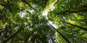 QS introduces environmental impact rating